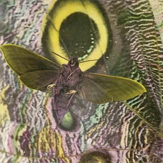 mothmen_image001