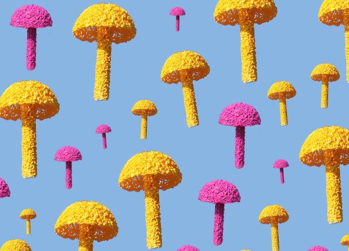 mushroom_shop1